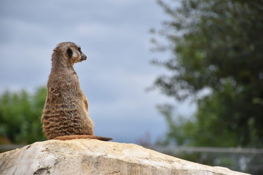 À la découverte des animaux au zooparc de Beauval